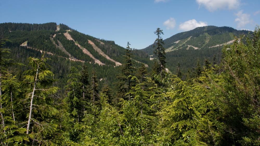 Cypress ski