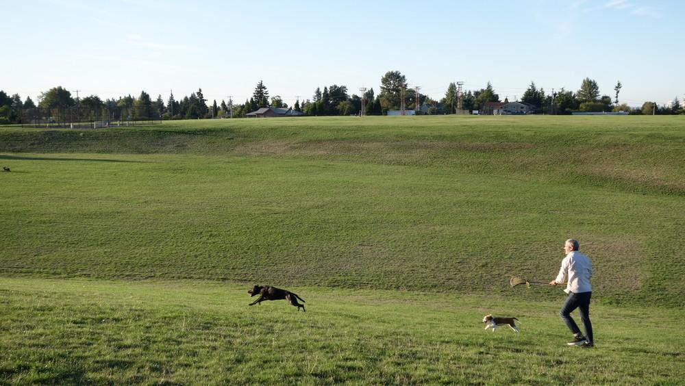 Run dogs, run