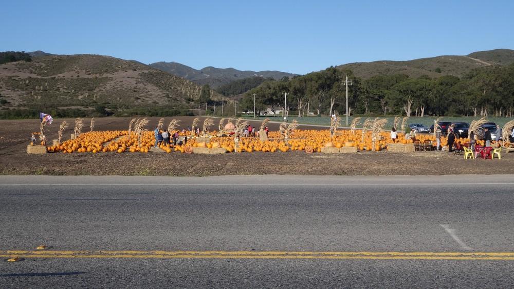 Pumpkin-mania