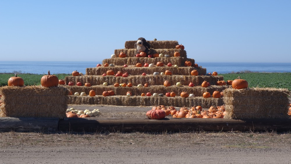 The king of the pumpkins!